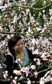 【心灵】在春天的原野上(散文)