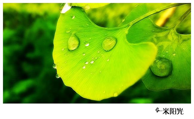 背景 壁纸 绿色 绿叶 树叶 植物 桌面 650_400