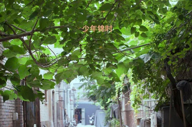 【晓荷】少年锦时(散文)