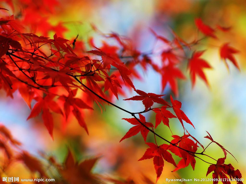 海绵纸秋天的树叶手工制作