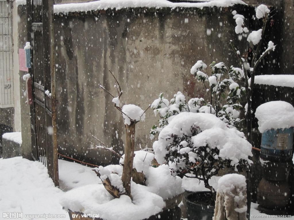 东北 树枝发芽 雪