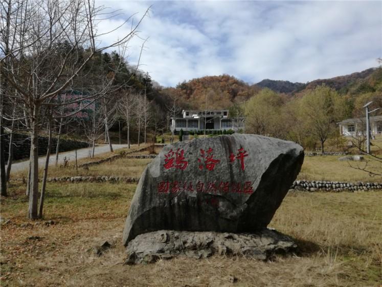 【荷塘】重访鹞落坪(散文)     鹞落坪自然保护区在安徽岳西县包家乡