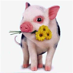 附言:猪头哥哥,好可爱的歌曲
