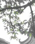 【晓荷·遇见】印记里的东涌时光(散文诗三章)