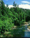 【柳岸】心上的森林(诗歌)