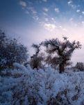 【桃源】一场大雪落在了春天(外一首)