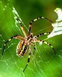 【荷塘】蜘蛛(外二首)