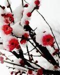 【桃源】如诗如梦的春天(组诗)