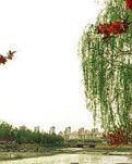【柳岸】寻春,请来胶东(散文)