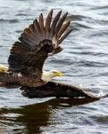 【荷塘】峡谷飞出的鹰(外一首)