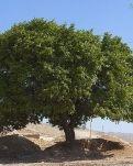 【柳岸】孤独的树(散文)