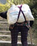 【宁静】徽杭古道行记(散文)