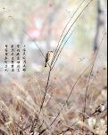 【星月·六年】又见雀儿阵(散文)