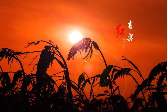 【渔舟】高粱红了(散文)