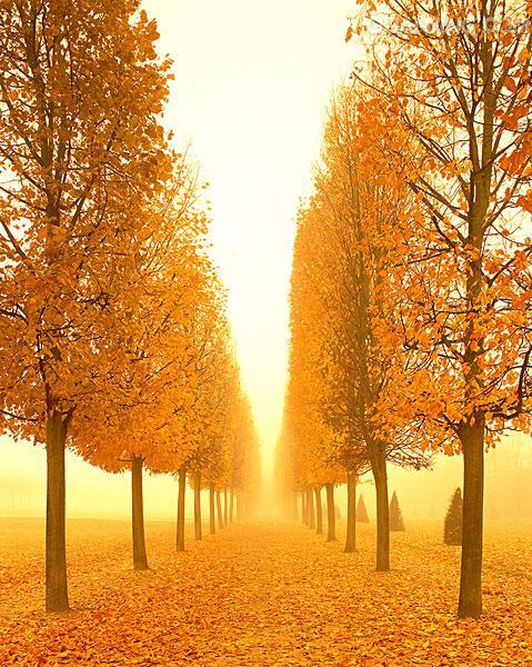 【清韵】将一枚秋韵揉进冬的诗行里(诗歌)