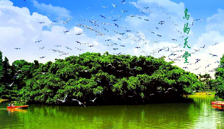 不得不说河,没有河,就没有这棵巨大的榕树,也没有这么多鸟.