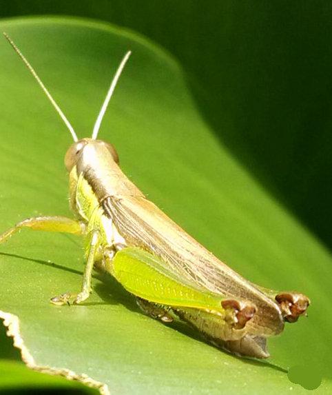 昆虫结构图气管