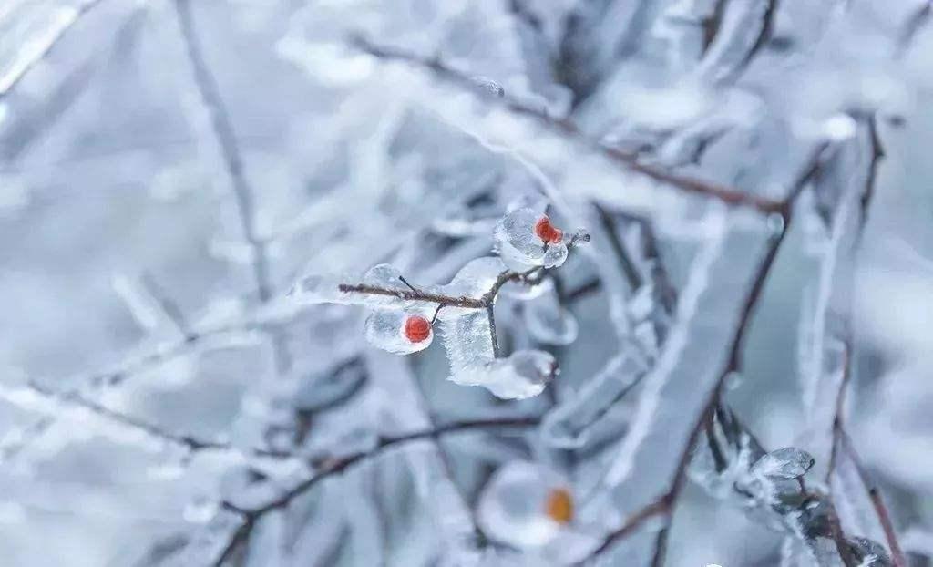 【暗香】雪化无痕(散文)