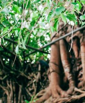 【流年】寺庙里的树(散文)