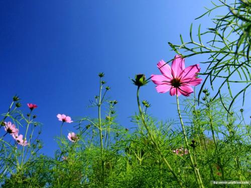 【八一】野花(外六首)