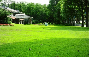 真想变成翠绿的草坪(诗歌)
