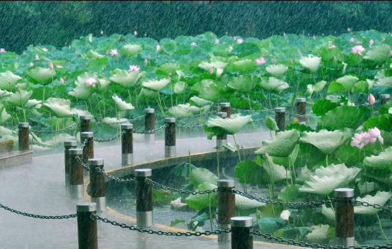 【八一】五律·雨落荷塘(新韵外三首·家园)