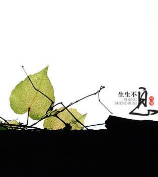 【流年】生生不息(散文)