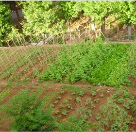 我们幼儿园大门对着的是一块儿低于地面两米左右的菜园图片