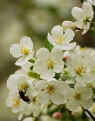 【流年】带着蜜蜂追花(散文)