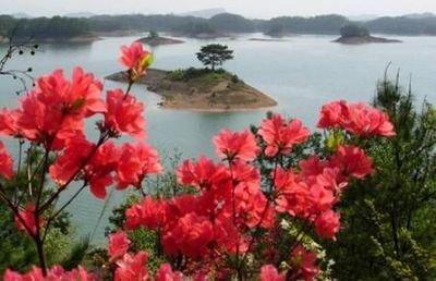 【江山人赏江山文】《山花依旧》的创作意识观和审美观(八一)