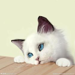 可爱的小猫(写话)