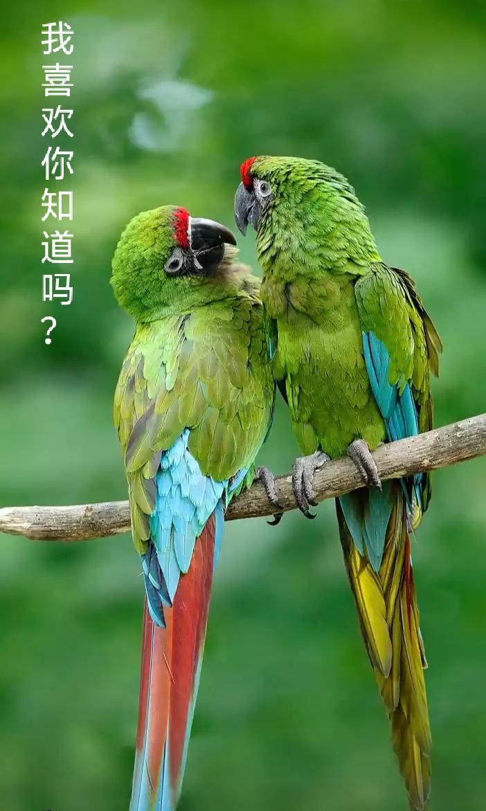 【看点·缘】爱情,就是拌着嘴儿过日子(散文)