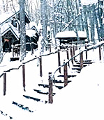【浪花】多彩的森林(散文)