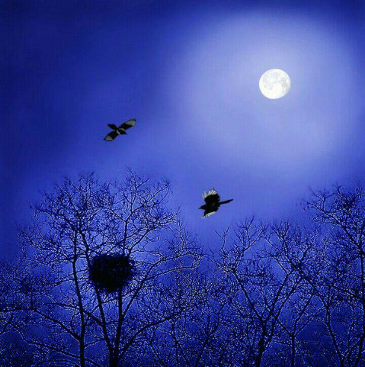 月光风景图片大全唯美