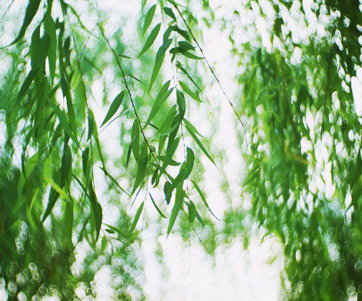 我以为,冬天还要很久才会过去,季节霸主的地位总让冬意显得冗长,寒意深裹的季节,抽身而退总是艰难。    然而,吐绿的柳芽,钻绿的小草,倾绽的花儿,解冻的水流,轻舞的彩蝶,高歌的鸟儿无入不释放着春的讯号。    渐渐热闹的空气,无处不在的春光,铺天盖地的春潮,告诉我们:春,终是要来的。春天,终于卷土重来了。    我极少出门,喜欢呆在家里,被寂静包围,忽略四季更迭的变化。感受春意的来临,并非领略到外边世界的曼妙春光,而是春日懒懒上升的温度让我卸下了冬日厚重的包裹。不再每天守着电暖炉,把紧闭的门窗打开,让