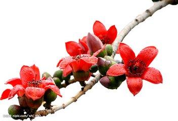 花瓣网血迹自定义素材