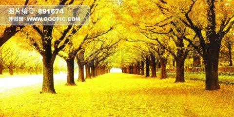 壁纸 风景 森林 桌面 480_240