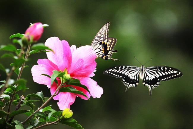 【晓荷·凡】二十七只蝴蝶(小说)