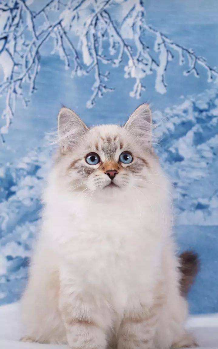 【看点】猫事(小说)