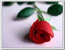 【时光】那朵玫瑰属于你(小说)