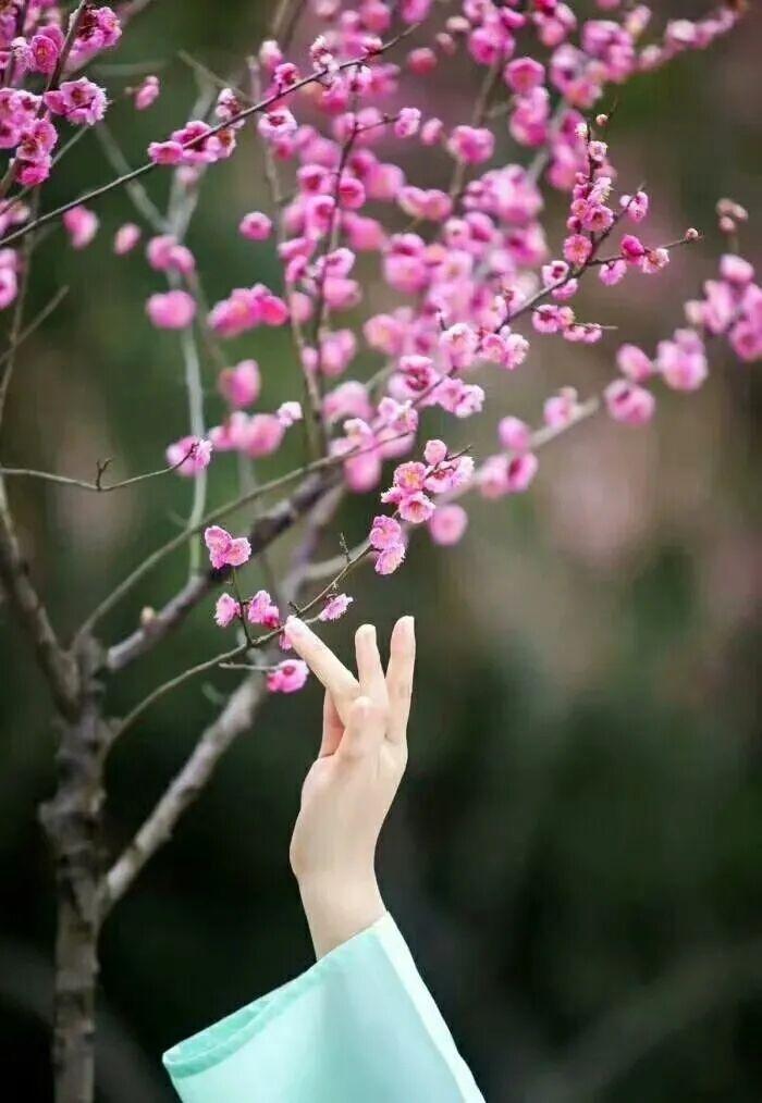 【清韵】催开春天需要多少花朵(外五首)