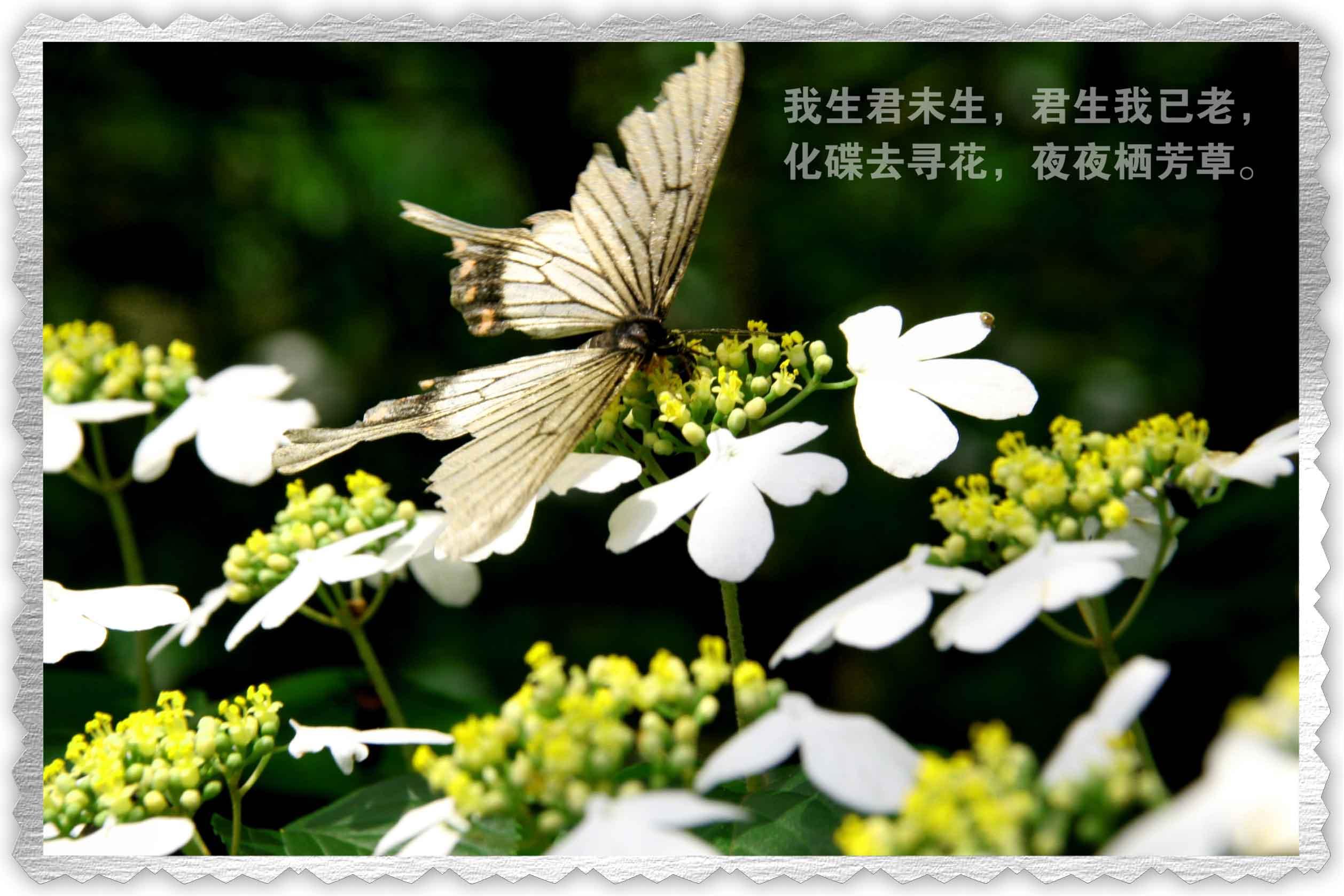 【清韵】每一块开花的石头都刻满故事(外三首)