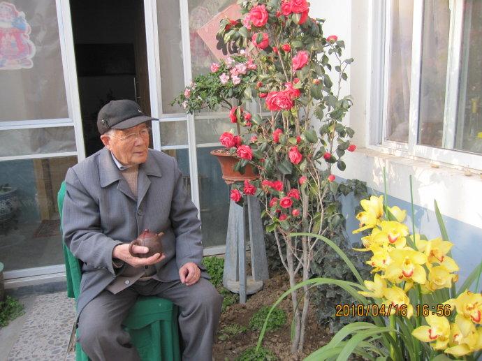 桃树叶子发红卷曲图片