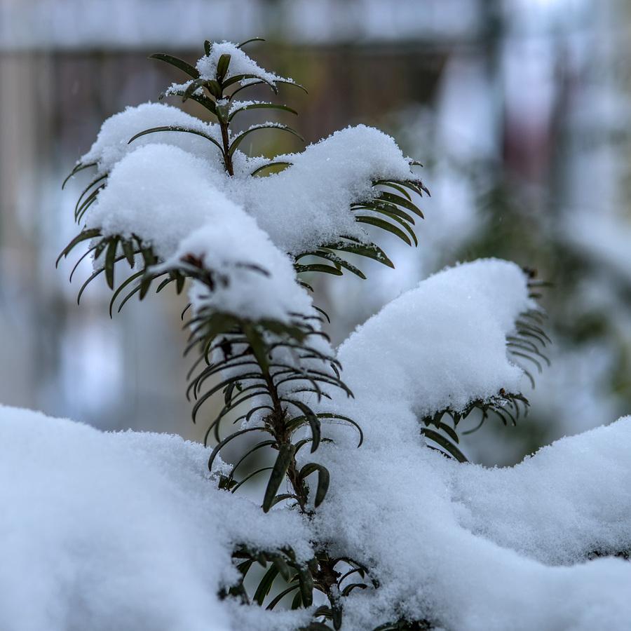【暗香】冬之印象(散文)