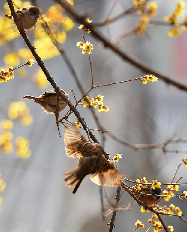 【八一】西江月·春风(古韵外三阕·家园)