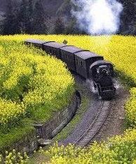 【流年·中国故事】一条铁轨弯又长(散文)