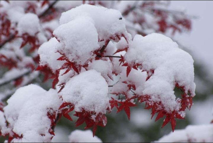 【八一】一朵梅花,摘走了一个季节(诗歌·家园)