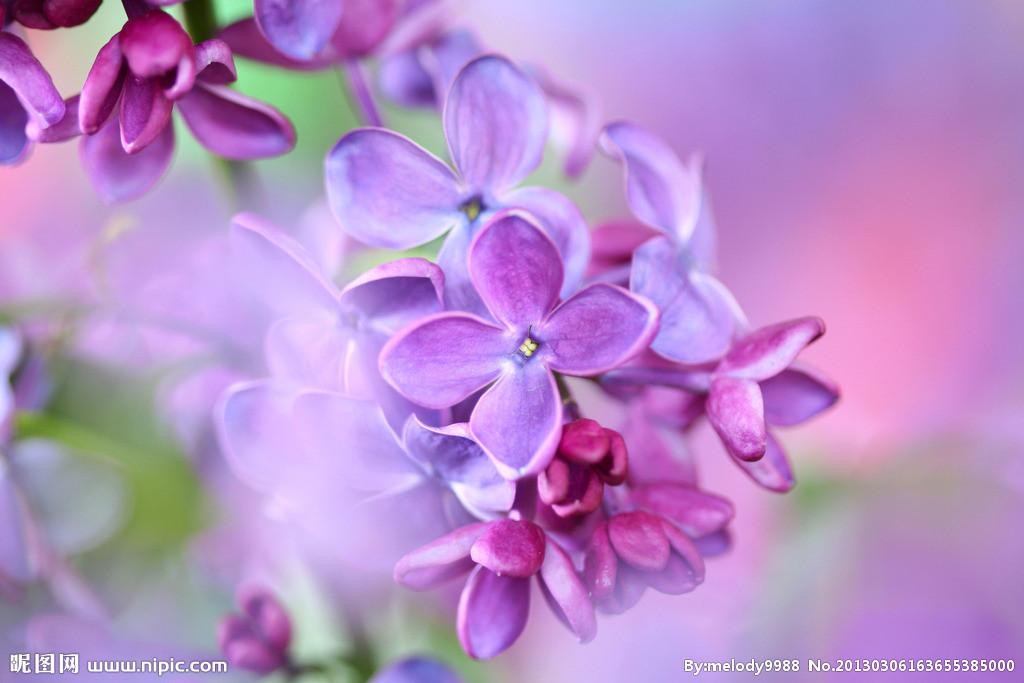 女生頭像紫色燈光