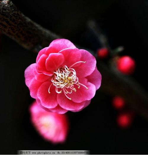 【风恋】南歌子十四部韵(古韵)