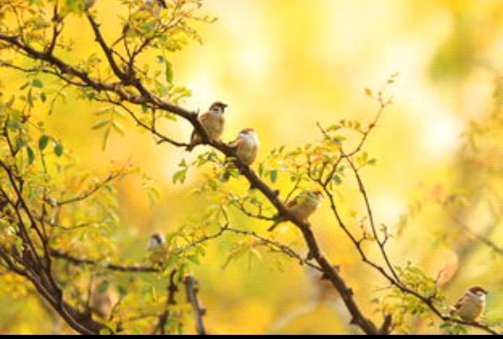 【八一】远离阳光的鸟鸣(外三首·家园)